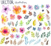 Colorful floral collection with flowers, leaves and berries. For beautiful design Stock Photography