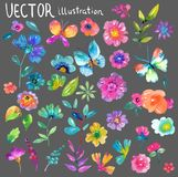 Colorful floral collection with flowers, leaves and berries. For beautiful design Stock Image