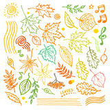 Colorful floral collection with leaves and decorative elements, autumn leaf hand drawn vector illustration Royalty Free Stock Photo