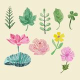 Colorful floral collection with leaves and flowers, drawing wate Stock Photography