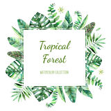 Colorful floral frame with colorful tropical leaves. royalty free illustration
