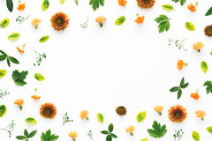 Colorful Floral Frame Royalty Free Stock Photo