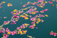 Colorful floral offerings, petals, flowers and garlands, floating in Pushkar Lake, India Stock Photo