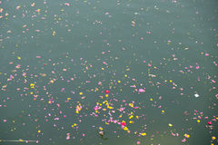 Colorful floral offerings, petals, flowers and garlands, floating in Pushkar Lake, India. Colorful floral offerings, petals, flowers and garlands, floating in Stock Photos