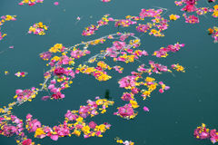 Colorful floral offerings, petals, flowers and garlands, floating in Pushkar Lake, India. Colorful floral offerings, petals, flowers and garlands, floating in Royalty Free Stock Image