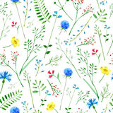 Colorful floral pattern with wild flowers and herbs. Floral seamless pattern.Colorful floral pattern with wild flowers and herbs on a white background, drawing Royalty Free Stock Images