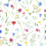 Colorful floral pattern with wild flowers and herbs. Floral seamless pattern.Colorful floral pattern with wild flowers and herbs on a white background, drawing Royalty Free Stock Image