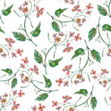Colorful floral pattern with wild flowers Royalty Free Stock Photography