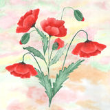 Colorful floral watercolor illustration. Vintage  card  hand dra. Wn red poppies Royalty Free Illustration