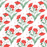Colorful floral watercolor illustration. Vintage  hand drawn red poppies Royalty Free Stock Image