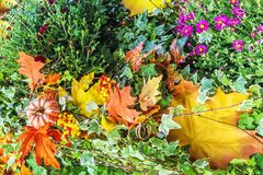 Colorful floristic autumn composition with flowers.  Stock Images