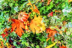 Colorful floristic autumn composition with flowers.  Royalty Free Stock Photo