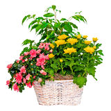 Colorful flower arrangement in basket Royalty Free Stock Photography