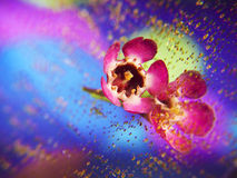 Colorful Flower background. A flower reflected in a mirror with a colorful background Stock Photography