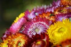 Colorful Flower. Background beautiful beauty Stock Photo