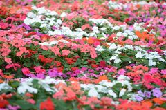 Colorful flower background Royalty Free Stock Photos