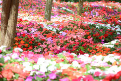 Colorful flower background Royalty Free Stock Images