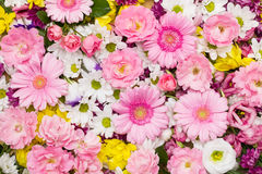Colorful flower background Royalty Free Stock Photography