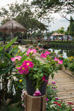 Colorful flower with bamboo bridge Royalty Free Stock Photos