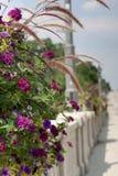 Colorful flower basket on bridge Stock Photo