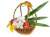 Multi Flower in basket isolated on white vector illustration