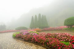 Colorful flower in beautiful garden with rain fog Stock Photography