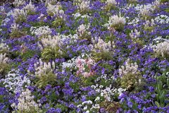 Colorful flower bed Royalty Free Stock Photography