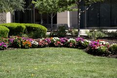 Colorful flower bed in city garden ST Louis MO USA. Colorful flower bed in city garden ST Louis, MO USA royalty free stock photo
