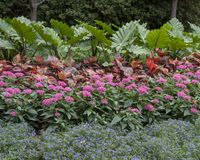 Colorful flower bed at the Dallas Arboretum and Botanical Garden. Pictured is a colorful flower bed at the Dallas Arboretum. From front to back are layers of stock image