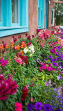Colorful flower bed in New Mexico Stock Image