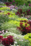 Colorful Flower bed Stock Photos