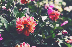 Colorful flower bed after the rain Royalty Free Stock Image