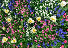 Colorful flower bed in spring Stock Photo