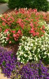 Colorful Flower Beds Along a Sidewalk. A grouping of colorful flowers along the side of a walkway royalty free stock images