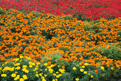 Colorful flower beds Stock Photos