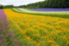 Colorful flower blossom garden in Japan in Blur style Stock Photo