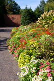 Colorful flower border. Colorful flower bed / border with colorful annual African daisies, Mexican sunflowers and perennial hydrangea in the Missouri Botanical royalty free stock photo
