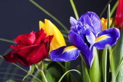 Colorful flower bouquet Royalty Free Stock Photography