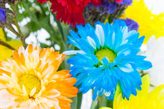 Colorful flower bouquet arrangement in vase  on white ba Royalty Free Stock Photography
