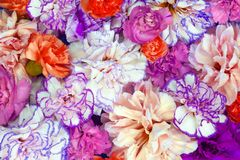 Colorful flower bouquet background made of colorful carnation flowers wall for background and wallpaper royalty free stock photos