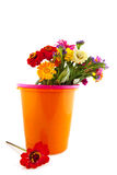 Colorful flower bouquet in bucket Stock Photos