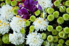 Colorful flower bouquet. Stock Photos
