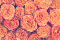 Colorful flower bouquet from roses in vanilla tones. Stock Photos