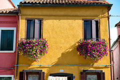 Colorful flower boxes on a yellow Burano house. Colorful flower boxes filled with pink flowers on a traditional brightly painted yellow fisherman's house in Royalty Free Stock Photos