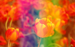 Colorful flower. Bright colorful flower in the garden Royalty Free Stock Photography