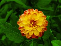 Colorful Flower (ClipPaths) Royalty Free Stock Image