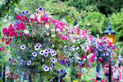 Colorful Flower Display in a Canadian Garden Stock Images