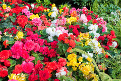 Colorful Flower Display in a Canadian Garden Stock Photo