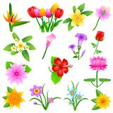 Colorful Flower. Easy to edit vector illustration of colorful flower collection Stock Photos
