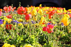 Colorful flower field. Colorful field of flowers a variety of them Stock Photo